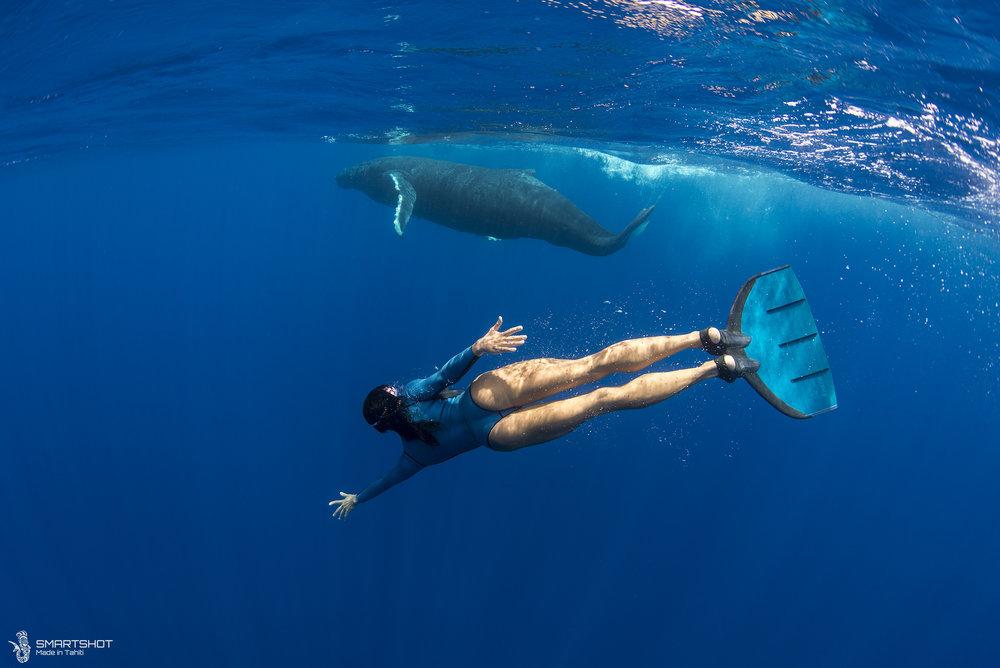 The whales whisperer