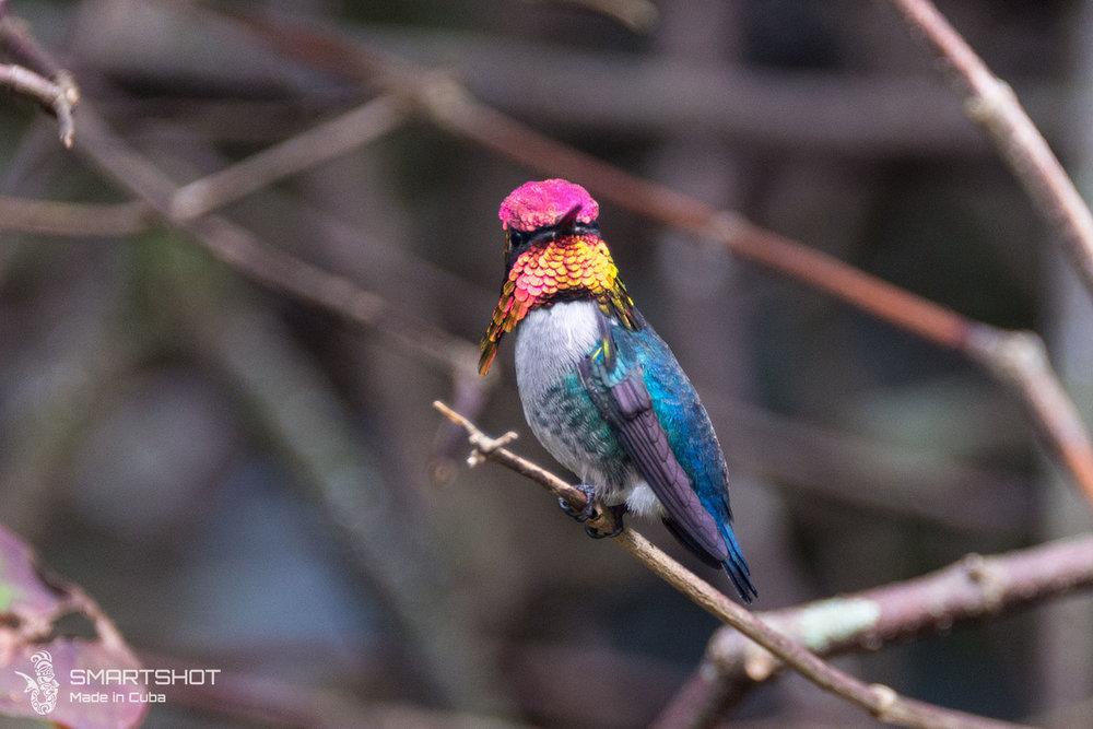 180110_Cuba_Birds&Wild_036.jpg
