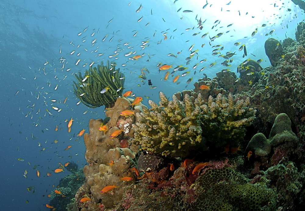 Coral Reef Andaman Islands - Author: Ritiks License: CC BY-SA 3.0
