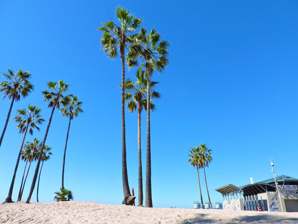Venice Beach Palm Trees.jpg