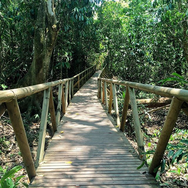 The best paths aren't too crowded 🍃 . . . . . #abmtravelbug #beautifulworld #beautifuldestinations #costarica #darlingmovement #exploremore #exploretheworld #forest #goexplore #helloworld #igers #igtravel #instagood #jungle #keepitwild #livethelittlethings #manuelantonio #nature #nothingisordinary #photooftheday #trees #green #path #roamtheplanet #seetheworld #travel #traveljunkie #travelblogger #thatsdarling #thehappynow
