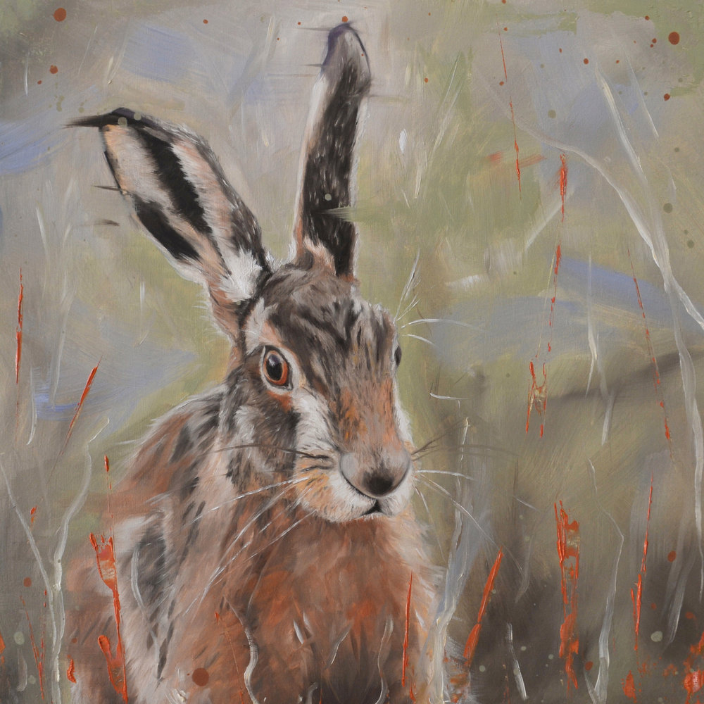Hare in the long grass - press image.jpg