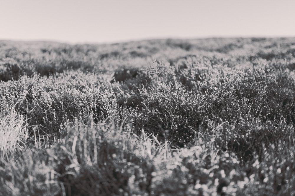 WelshLandscape-1.jpg