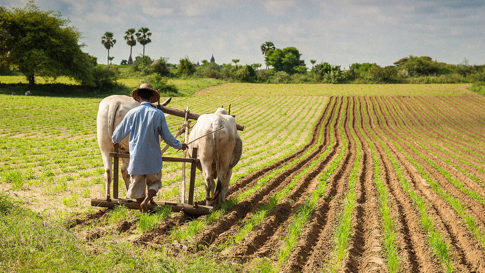 3050905-poster-p-1-ideoorg-is-bringing-low-cost-precision-agriculture-to-developing-countries.jpg