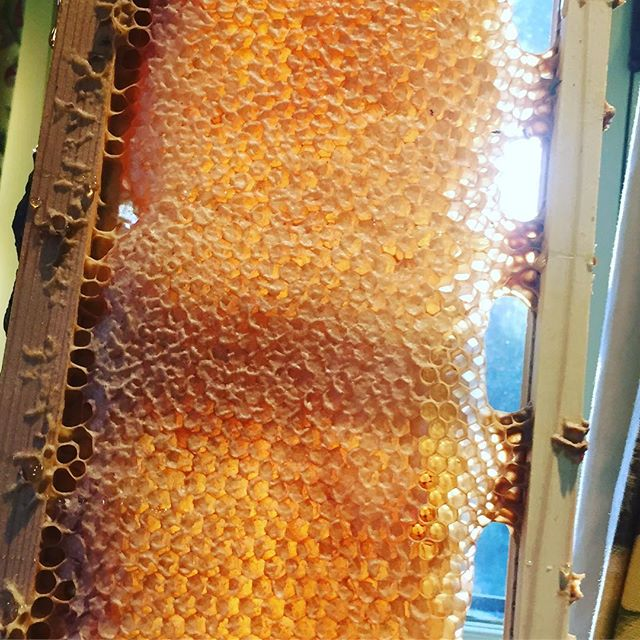 Did you know that approximately 1/3 of the food we eat is the result of honey bee pollination? We'll have Jenny McComb from #IntheNameoftheBee at the #ProvidersSTL dinner on Monday to talk about how important the bee population is for our food production #themoreyouknow Click the link in bio to purchase your ticket! 📸 @mccombhoney