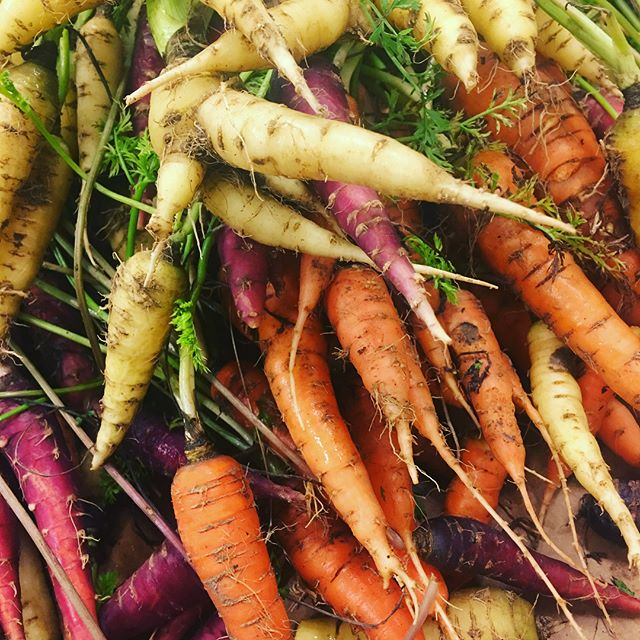 "How did 2 people who ""before 2011 had never even grown a house plant"" become a produce source for some of #STL most successful restaurants? Autumn and Dave of #SuchandSuchFarm will tell you how it happened Monday at the #ProvidersSTL dinner series. Limited seats available. Ticket link in bio #carrots #habanadapeppers #heatlesshabanero"