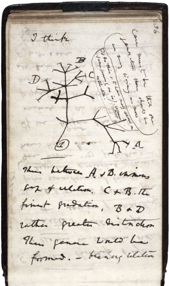 Darwin's tree of species, 1837
