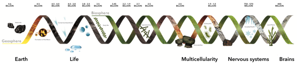 Life on Earth's illustrated timeline, from its origins to nowadays.