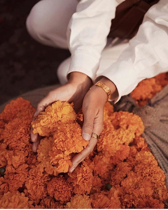 Marigold magic..✨✨ Not long now until the GTEF team will be touching down in India! [Watch this space...] image via @saasha_burns