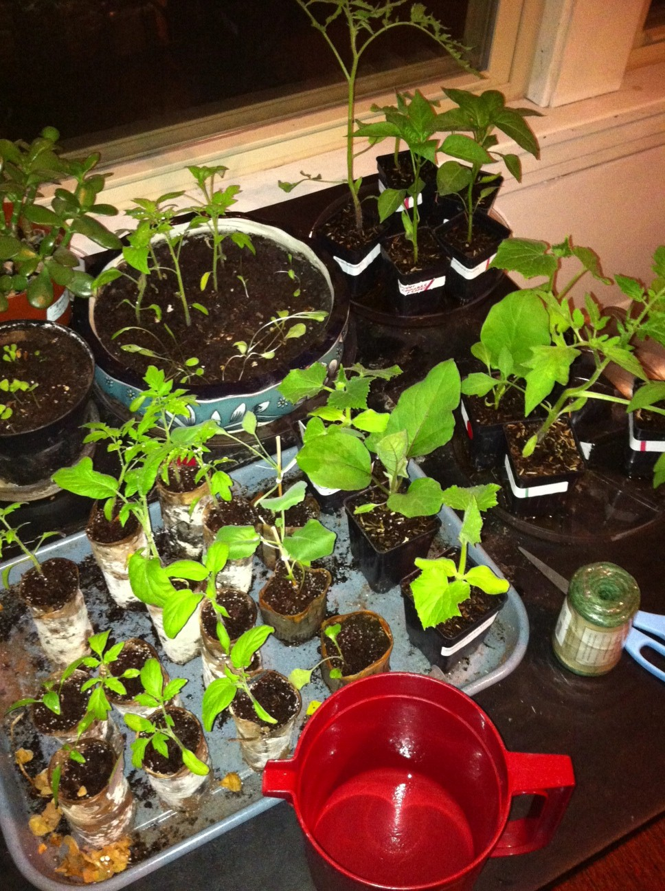Check out our seedlings!