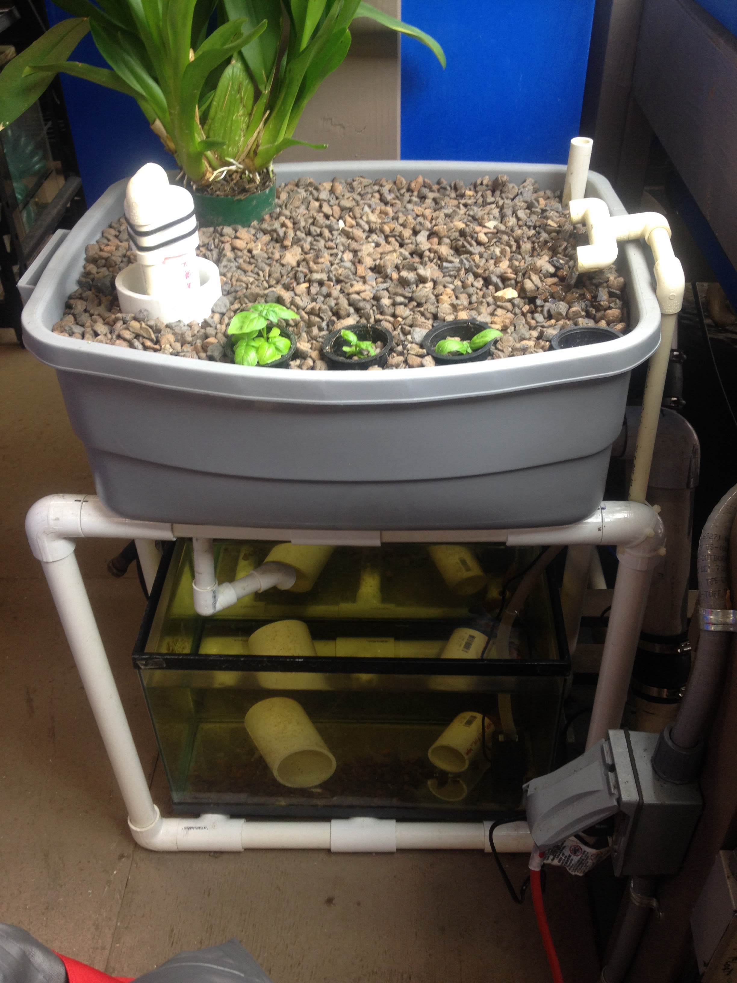 Individual home-sized aquaponic set-up