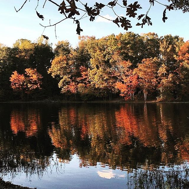 Running isn't so bad when the view looks like this. 🍂🍁 • • • • • • • #autumn #fall #stylecollective #nature #foilage #lake #running #runningtrail  #fashionblogger #collegeblogger #millennialblogger  #styleblogger #healthy #running #exercise #igblogger #dcblogger #lifestyleblogger #morning #northernva #northernvirginia #nova #burkelake