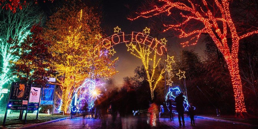 zoolights2.jpg