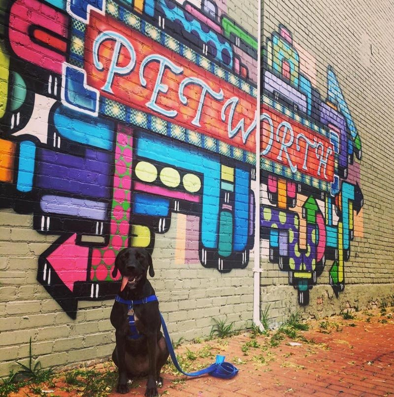viajera4eva-dog-in-front-of-petworth-street-mural_mydccool-homepage-09.20.jpg
