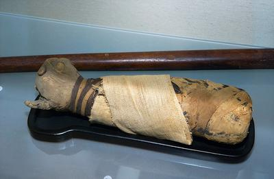 Mummy of a cat [Inv.nr. 291/438]