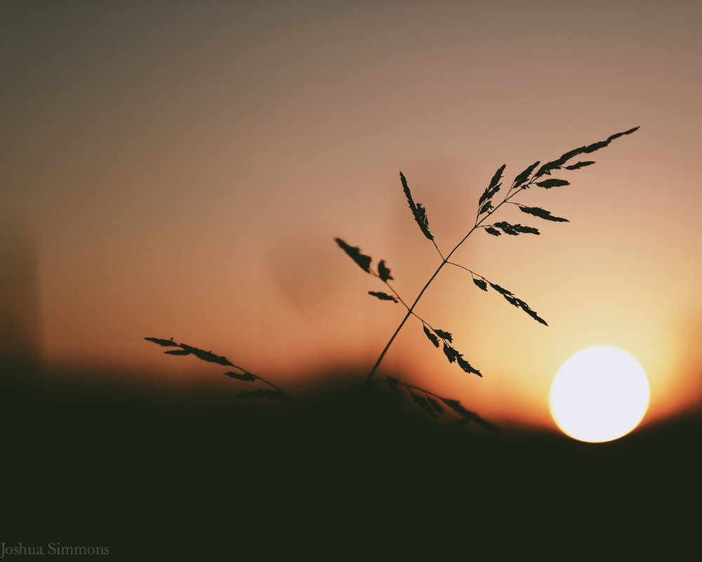 golden_hours_telephotos_and_the_simple_things_joshuasimmonsphotography 2.jpg