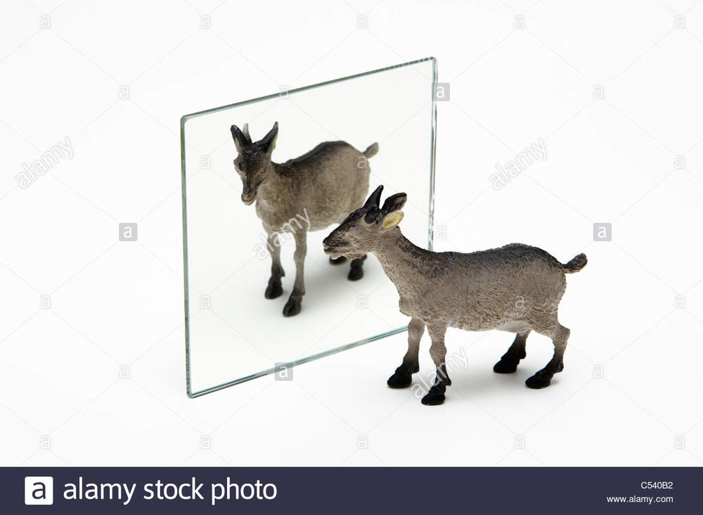 Who knew there was demand for stock pics of toy goats reflected in mirrors. You learned something today.
