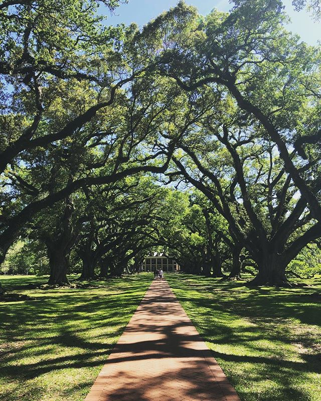 Oak Alley Plantation - one of my favorite places