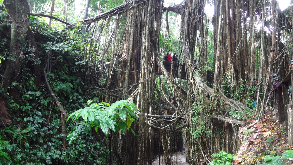 The people on the bridge show the scale of these huge trees and mass of vines.