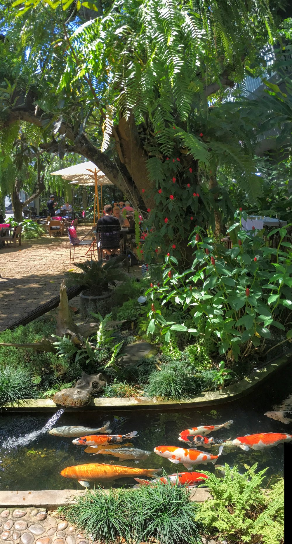 We stopped into Fern Forest Cafe hot and tired from miles of walking and sightseeing. It was a delightful spot to relax and cool off and have a nice meal! They, like many other restaurants in Chiang Mai, have cooling mist sprayers throughout the garden, and the mist feels terrific!