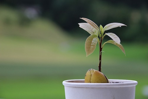 A Tree - Perfect present for the home owner (or future home owner)who is also health conscious. Give them a fruit tree that can bear gifts for them once a year for a long time. Or get a native tree that will stand the test of time better then an exotic fruit tree. I recommend getting from a local nursery like Little River Cooperative