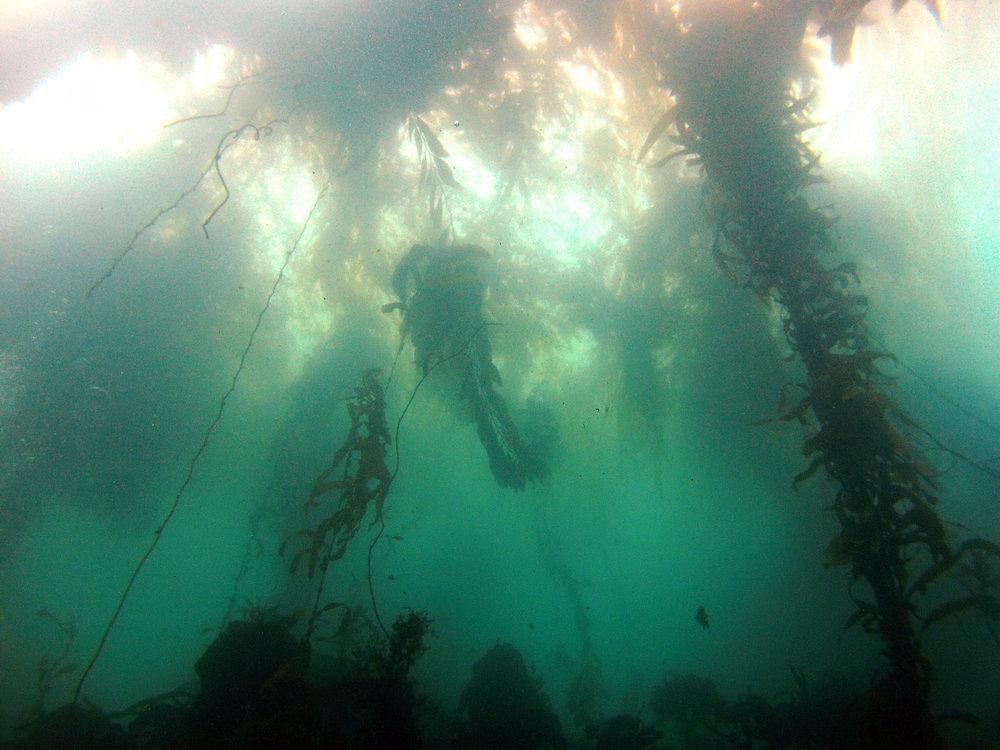 Whaler's Cove, Pt. Lobos State Park, California, USA (2015)
