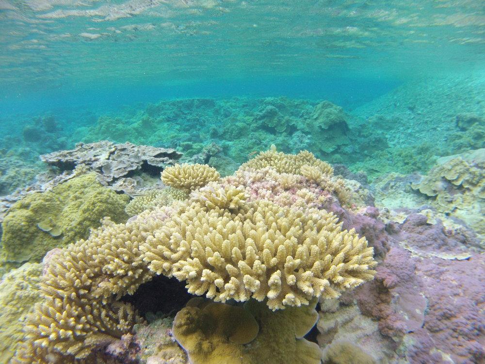 Palmyra Atoll (2014)