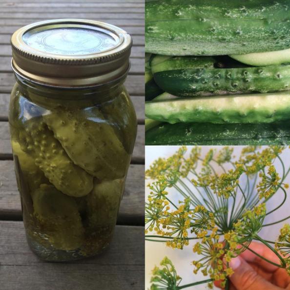 garlic-dill-pickles