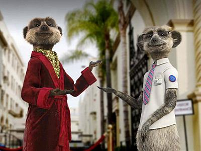 Property Cohort - Meerkats.jpg