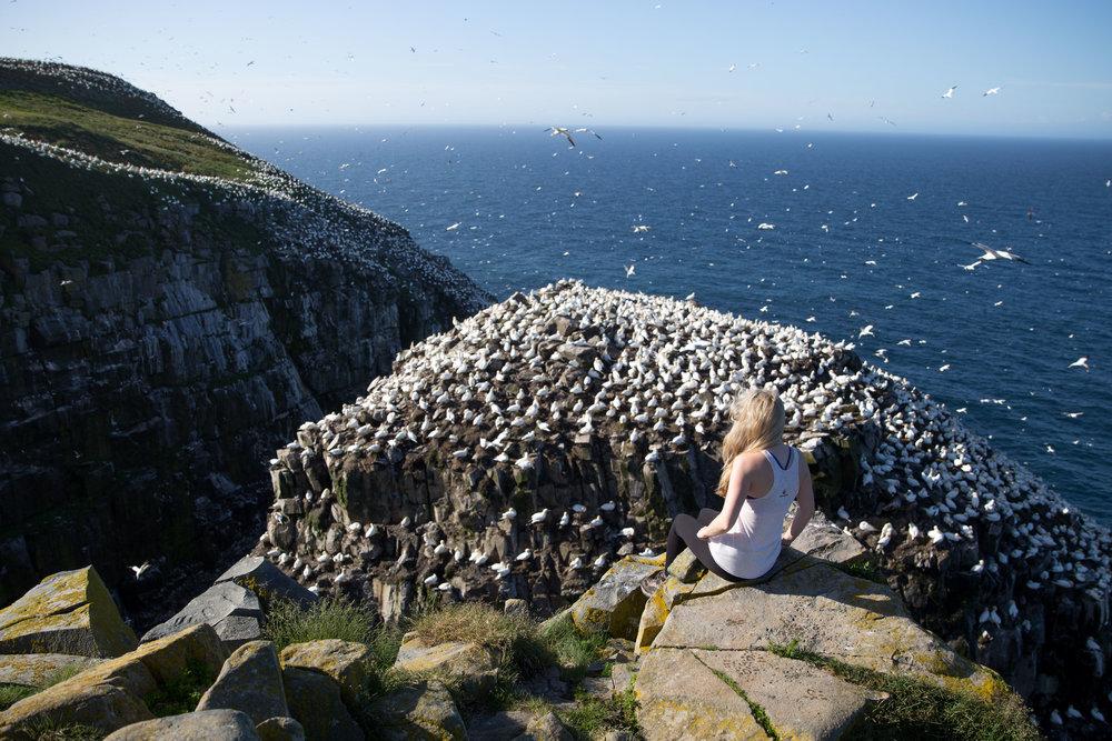 St Mary's 'Bird Rock'