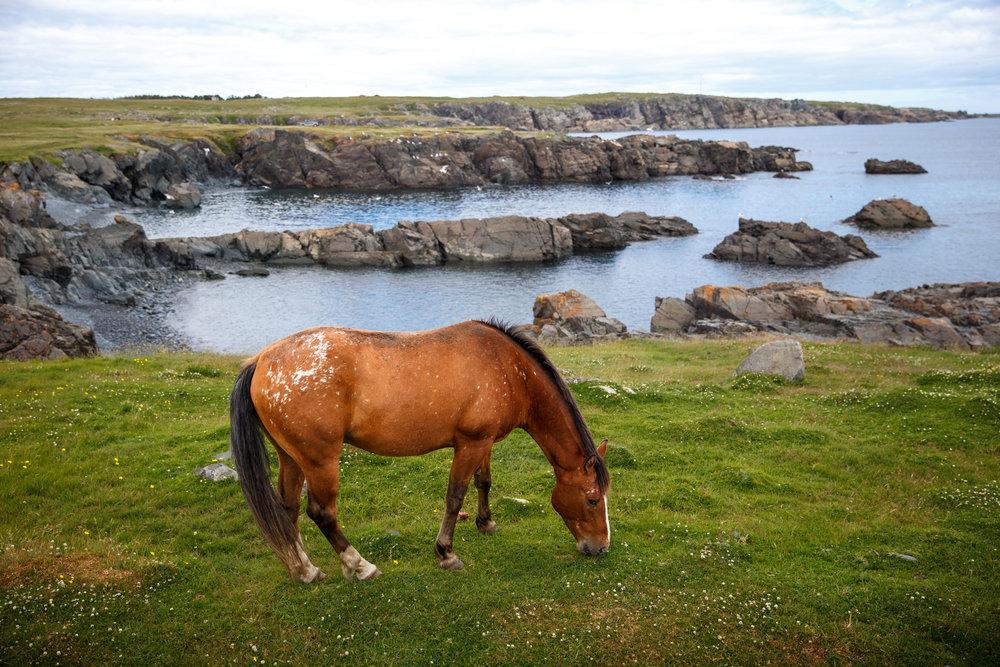 Roadside Pony
