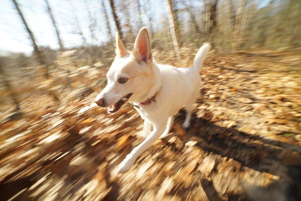 Lily Full Sprint