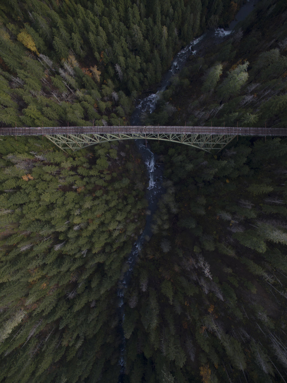 Vance Creek Birdseye