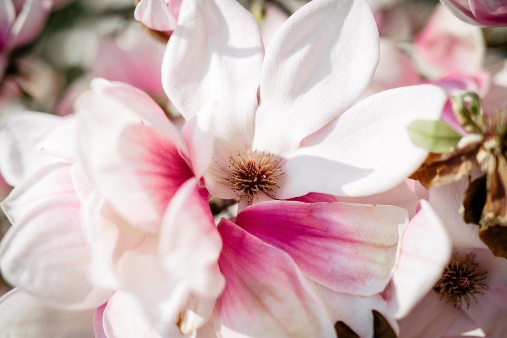 Frühling-35.jpg