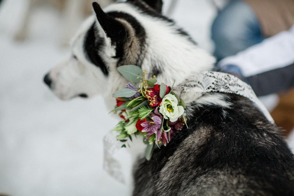 yessica-baur-fotografie-styleshooting-huskies-4046.JPG