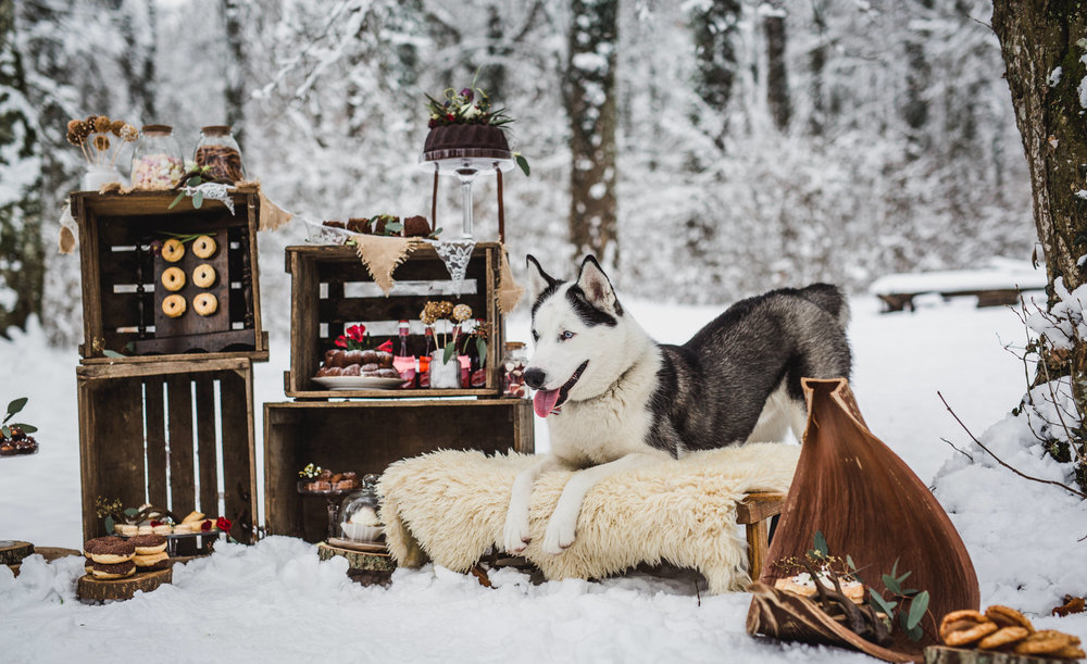 yessica-baur-fotografie-styleshooting-huskies-7770.JPG