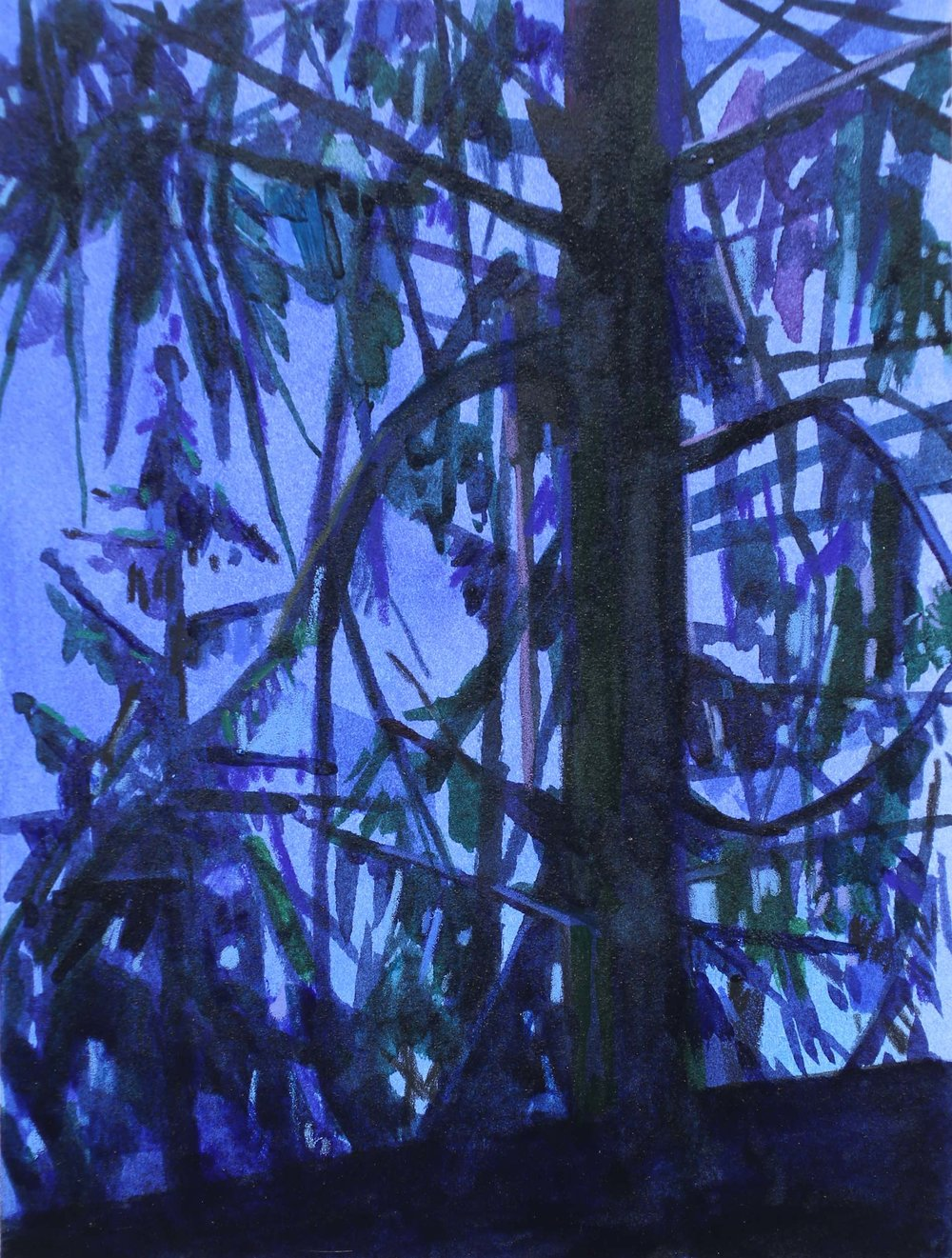Tree and Night, 2016