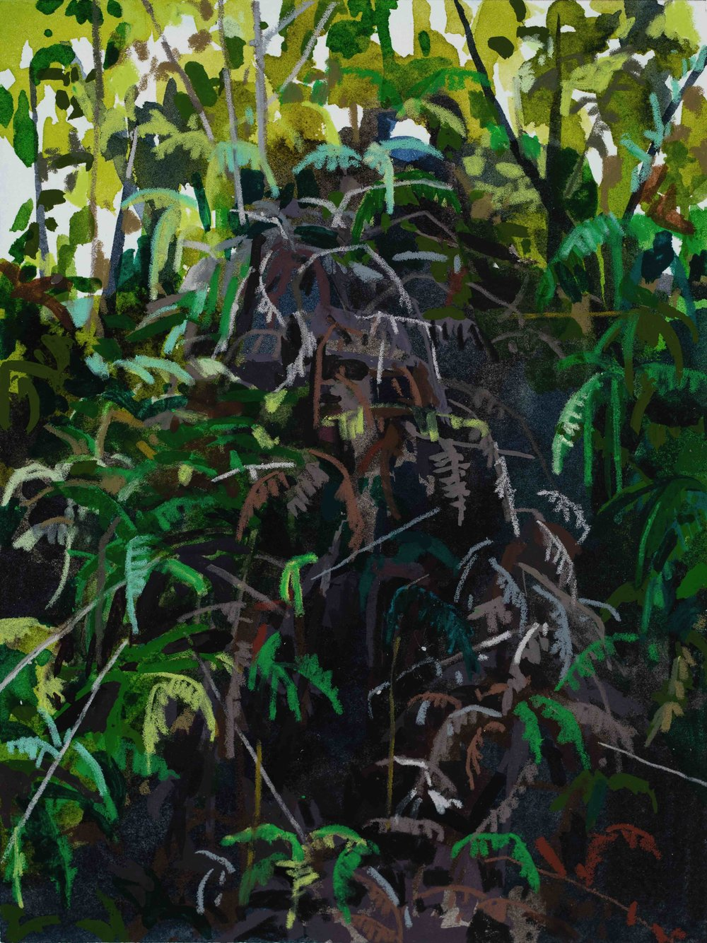 Ferns and Vines, 2019