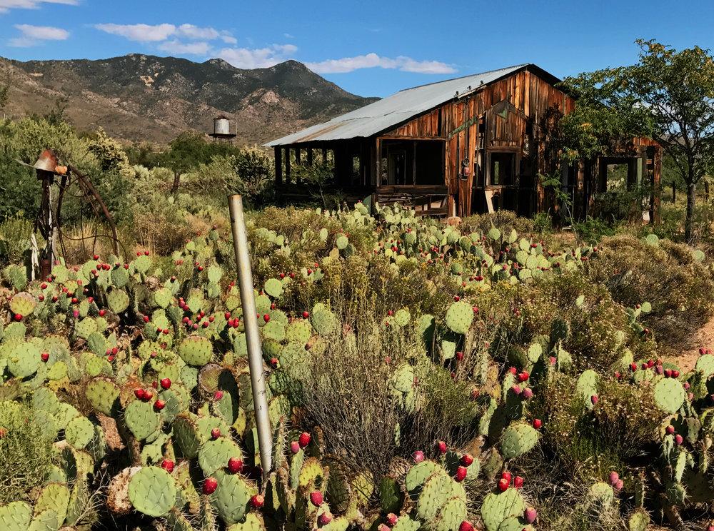 Despair in Bloom -Chloride, Arizona