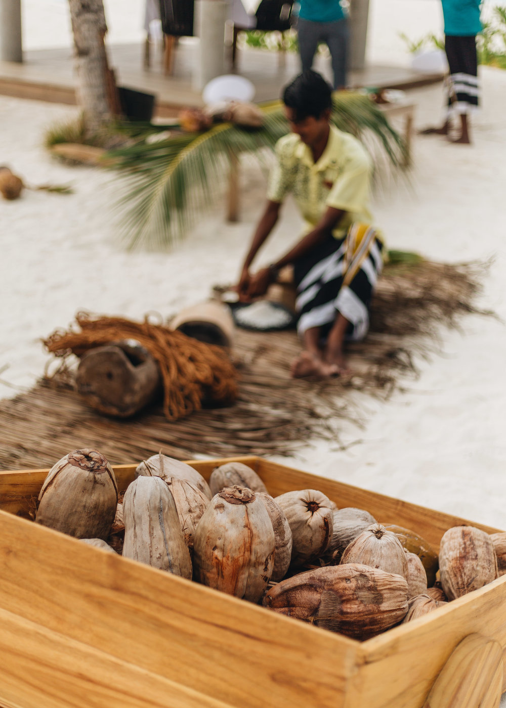 4:30 PM  //  Go Coconuts!  We got to catch a glimpse into the many ways Maldivians use coconuts at the afternoon Go Coconuts show! We learned to climb coconut trees, crack and use coconuts, and the many amazing uses of these giant tropical fruits!