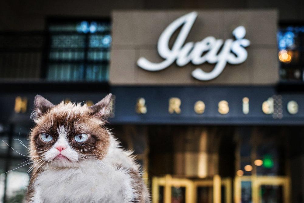 grumpy-cat1.jpg