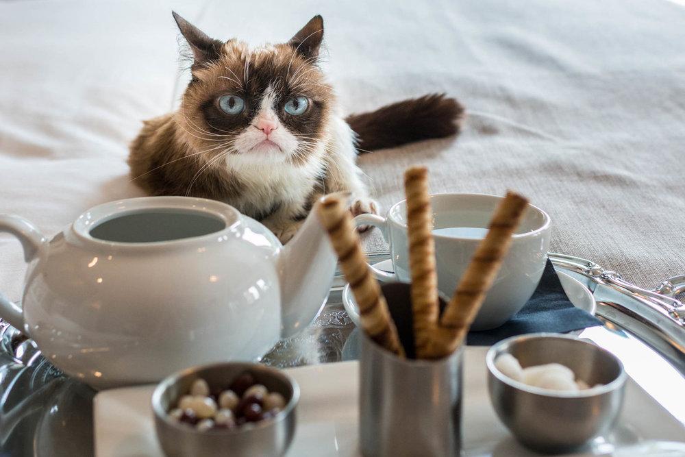 grumpy-cat10.jpg