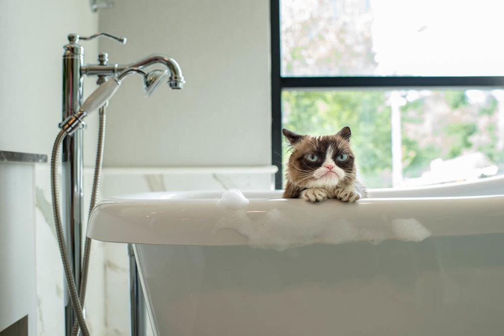 grumpy-cat11.jpg