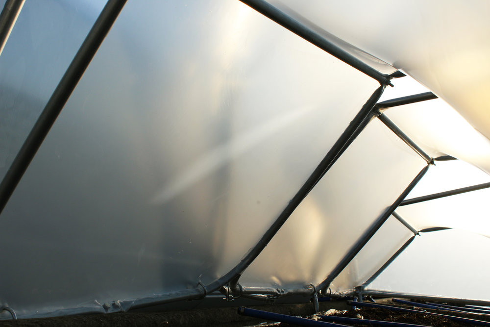 A plant's-eye view of the inside of the hoop house.