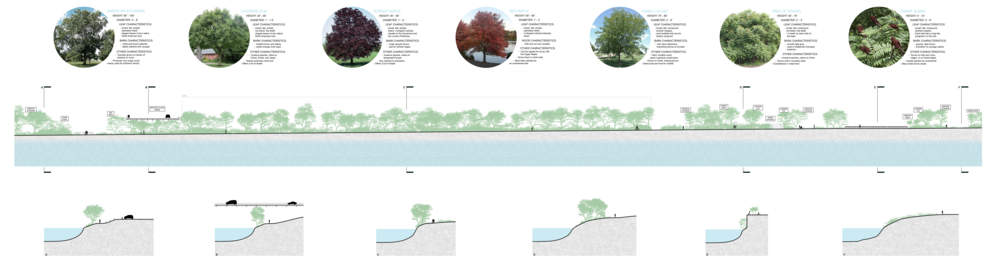 While visiting the site, I took note of the vegetation and mapped it onto this single long site section that runs along the walking path that crosses through the site. I then created a series of six sections which are perpendicular to the long section. These smaller sections show the relationship of the site to the river and how that condition changes over the course of the site.