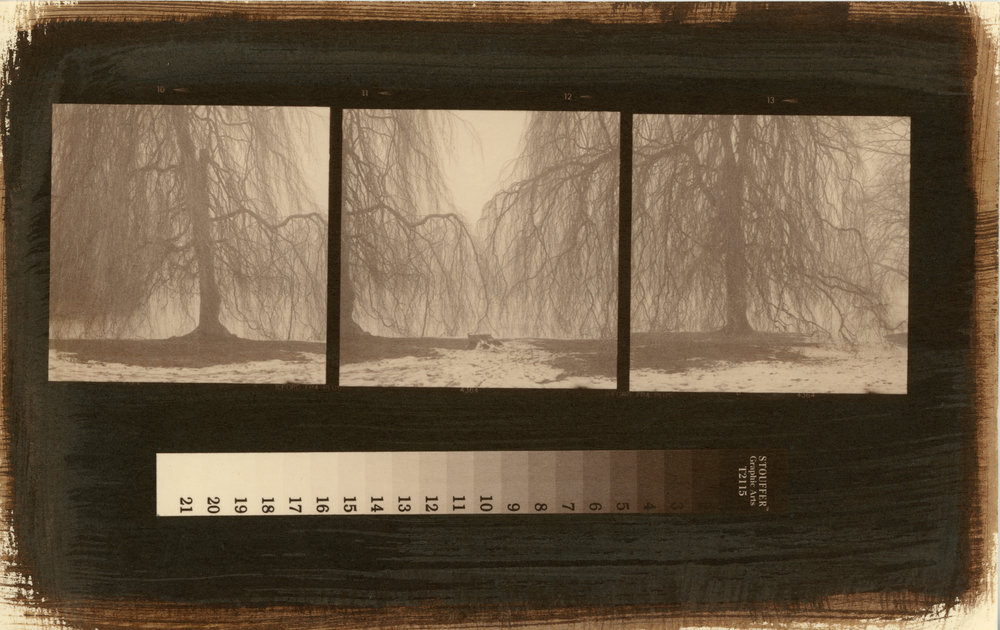 Three Trees, Salted Paper Print, 2017