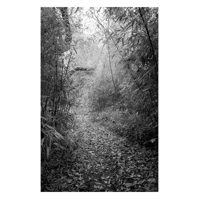 "Humlebæk, 2018.⠀ This is part of my Pocket Series ""Louisiana Garden"" – Link is in bio.⠀ .⠀ .⠀ #olympus #olympusxa #olympusxa3 #ilfordfp4 #ilfordfp4plus #foma #fomadonexcel⠀ .⠀ #shootfilmbenice⠀ .⠀ #35mm #35mmfilm #ilfordphoto #ilfordfilm #pointnshoot #pointandshoot #filmphotographic #filmphotography #filmisnotdead #believeinfilm #buyfilmnotmegapixels #istillshootfilm #filmisalive #filmcommunity #grainisgood #analogphotography #wasteoffilm #emulsive #emulsivefilm"