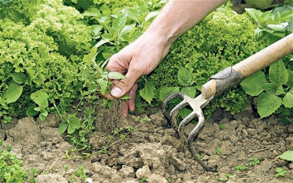 Organic-Weed-Control.jpg