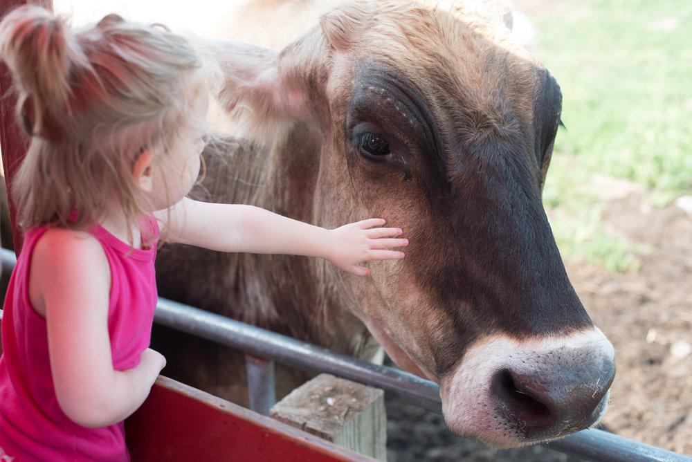 Old McDonalds Farm - Michelle Kinney Photography-64.jpg
