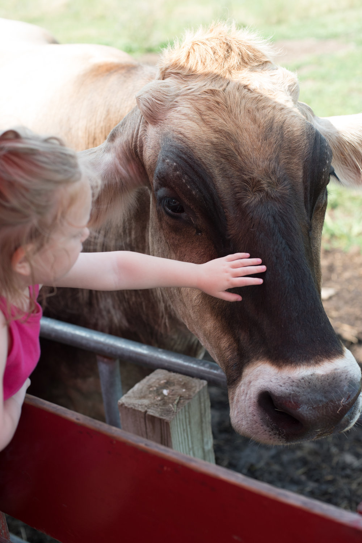 Old McDonalds Farm - Michelle Kinney Photography-65.jpg